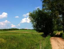 Sprzedam lub wydzierżawię ziemię rolną 253007